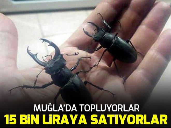 AMANOSLAR'DA YAŞIYOR, İNTERNETTE 15 BİN TL'YE SATILIYOR!