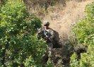 Son dakika: Bakanlık duyurdu! Bitlis'te'Yıldırım-15 Mutki-Sarpkaya' operasyonu başlatıldı