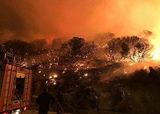 Antalya Kaş'ta korkunç olay! 25 dönüm küle döndü