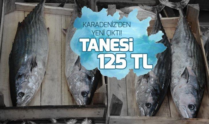 Karadeniz'den yeni çıktı! Tanesi 125 lira...