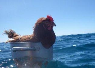 Denizin ortasında tencere içindeki tavuk sosyal medyayı salladı! Görenler gözlerine inanamadı