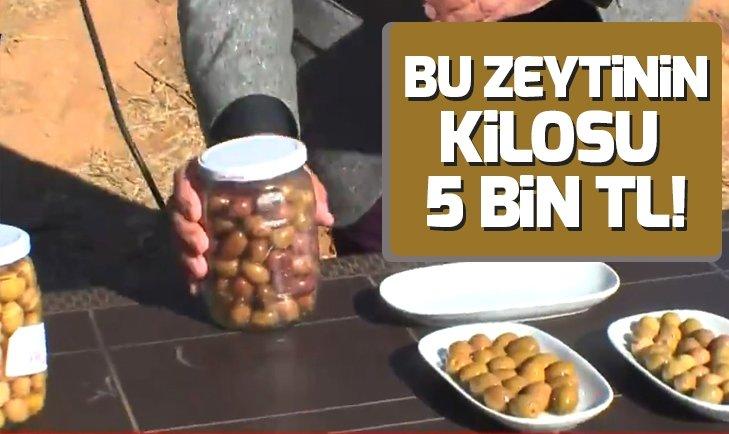 Bu zeytinin kilosu 5 bin lira!