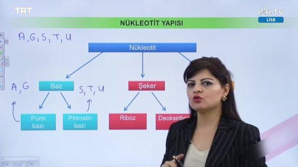 EBA TV - 12. Sınıf Biyoloji Konu, DNA