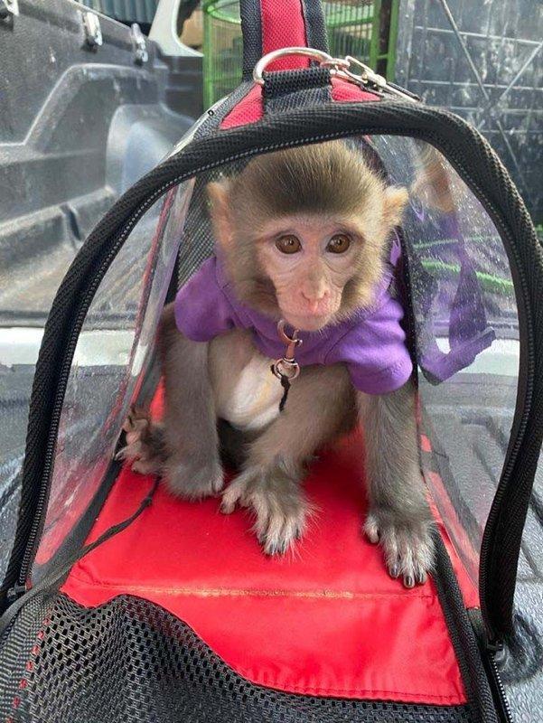 3'ncü kez maymun alan sosyal medya fenomeni Meriç İzgi tutuklandı!