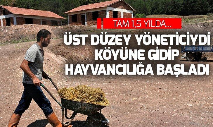 Üst düzey yöneticiydi köyünde hayvancılığa başladı! 1,5 yılda...