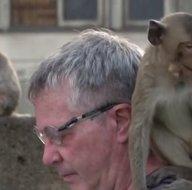Koronavirüs salgını nedeniyle boş kalan şehri ele geçirdiler! Öfkeli maymunlar çetesini böyle sakinleştiriyor