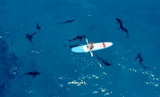 Sosyal medyayı sallayan köpek balığı deneyi yürekleri ağızlara getirdi! Okyanusa kan döküp bekledi ve...