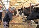 Antalya'da 4 bilezikle hayvancılık işine girdi, kurban siparişine yetişemiyor