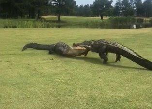 İki timsahın ölümüne savaşı böyle görüntülendi! Her anı...