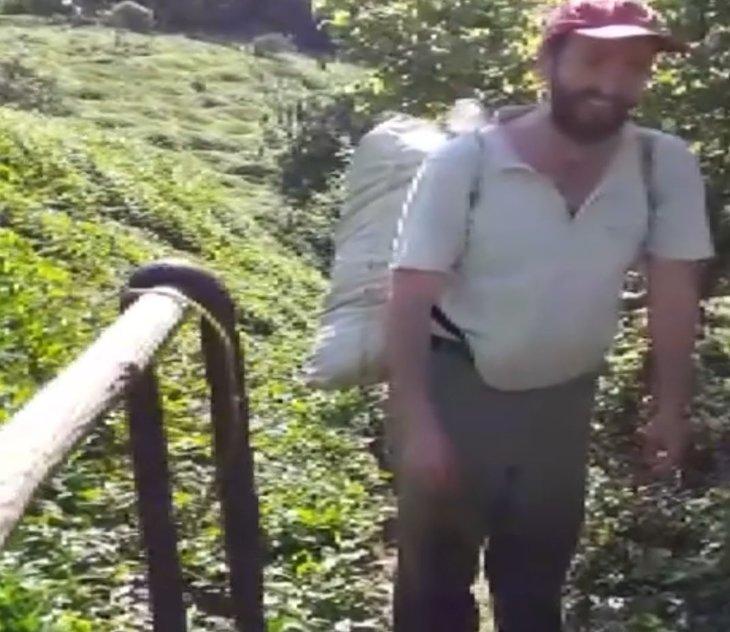 Rize'de çay bahçesinde tehlike uyarısı! 2 metrelik yılan...