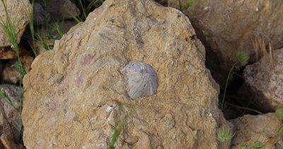 Hayvan otlatırken tesadüfen buldu! 85 milyon yıllık...