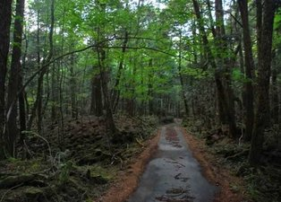 Kan donduran görüntü! Bu ormana adım atan...