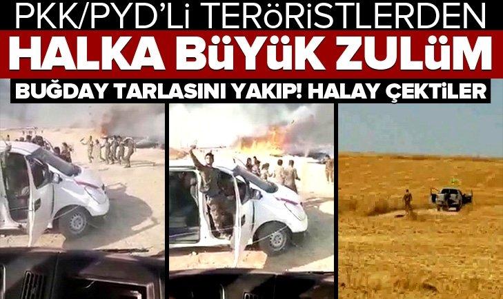PKK/PYD'DE BUĞDAY TARLASINI YAKIP, HALAY ÇEKTİ!