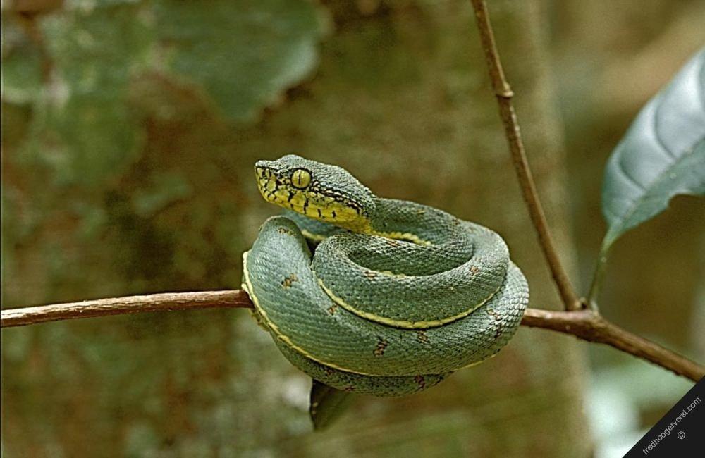 фото змей южной америки закончилась почти