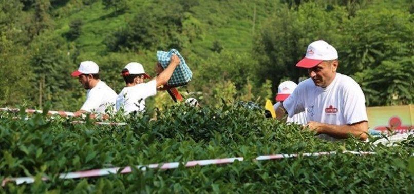 ÇAYKUR'dan Rize – Trabzon – Artvin'de 830 işçi alımı… ÇAYKUR işçi alımı başvuru şartları nelerdir?