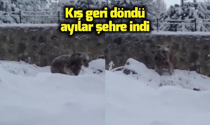 KIŞ GERİ DÖNDÜ AYILAR ŞEHRE İNDİ