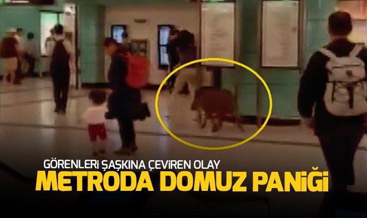 METRODA DOMUZ PANİĞİ!