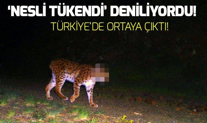 Türkiye'deki yaban hayatı fotokapanla görüntülendi