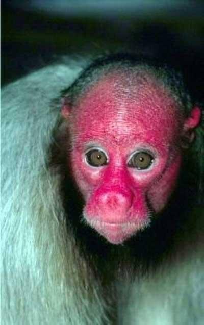 Dünyanın En Korkunç Hayvanları A Haber