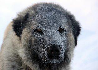 Tunceli'de kar yağışı ve tipi hayatı olumsuz etkiledi