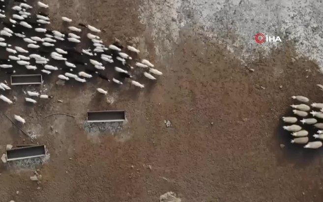 A Haber Videoları cover image