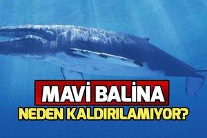 Mavi Balina oyunu nedir? Mavi Balina neden ölüme sürüklüyor? Mavi Balina oyunu ile ilgili haberler 2019!