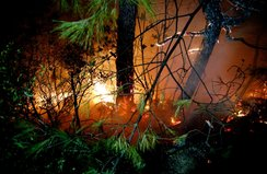 Hatay'da 25 farklı noktada yangın çıktı