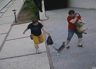 Antalya'da köpekli aileye saldıran kedi, hem korkuttu hem güldürdü