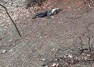 Adana'da kumalığı kabul etmeyen kadını vahşice öldürmüştü! Perde arkası ortaya çıktı