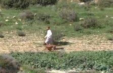 Filistinlilere 'Pitbull' saldırısı