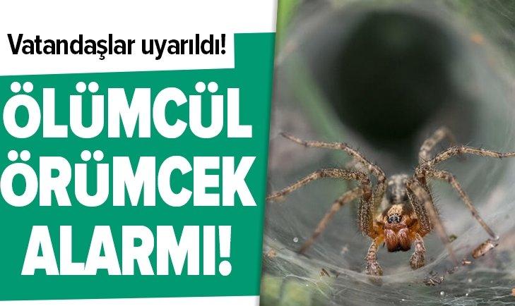 ÖLÜMCÜL ÖRÜMCEK ALARMI VERİLDİ!