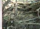 Düzce'de selde kaybolan İlayda Sinem Kaplan'ın cansız bedeni bulundu | Video