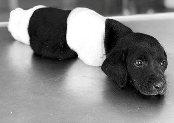 İçişleri Bakanı'ndan Sakarya'da yavru köpeğin ölümüyle ilgili açıklama