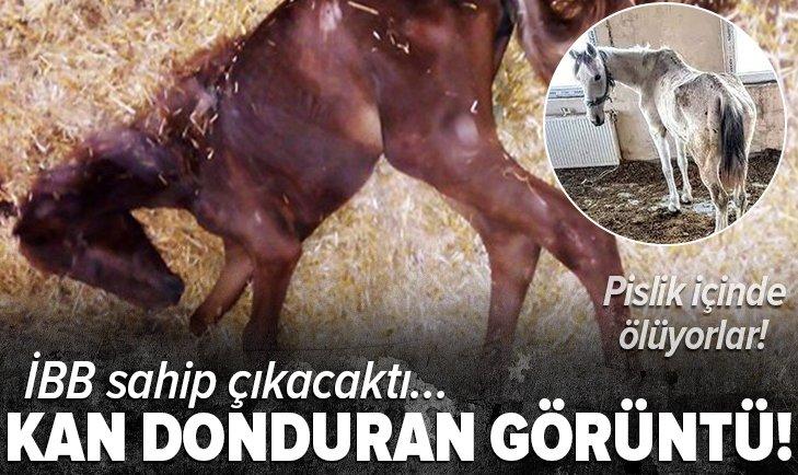 CHP'li İBB sahip çıkacaktı... Adalar'dan kan donduran fotoğraflar! Pislik içinde ölüyorlar!
