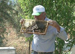 Son dakika | Arılarla inanılmaz bir bağı var! Tamamen koruması gidiyor yanlarına