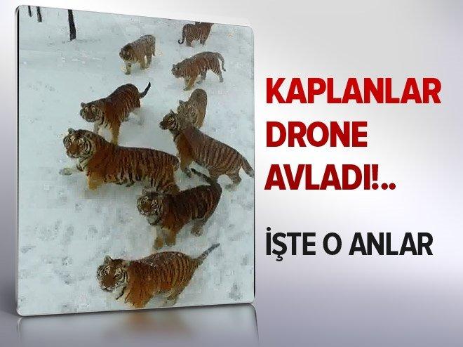 KAPLANLARIN DRONE AVLADIĞI AN!