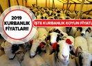 Kurbanlık koyun fiyatları ne kadar? 2019 küçükbaş kurbanlık fiyatları belli oldu!