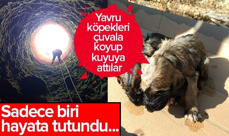 YAVRU KÖPEKLERİ ÇUVALA KOYUP KUYUYA ATTILAR!