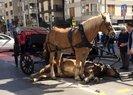 İBB, Adalar'daki faytonların plakalarını ve atları satın alacak