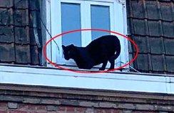Çatı katında panter şoku! Görenler şaşkına döndü...