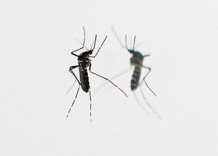 Sineklerle ilgili korkutan açıklama: Virüsü taşıyabilme riski fazla
