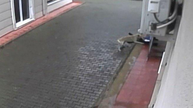 Aç kalan köpekler küçük çocuğa saldırdı