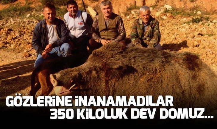 AVCILAR GÖZLERİNE İNANAMADI! 350 KİLOLUK DEV DOMUZ