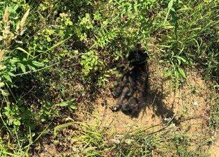 Sarıyer'de vahşet! Yavru köpeği cayır cayır yaktılar
