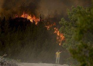 Orman yangınları sonrası seferberlik başladı! Ünlüler doğa için tek yürek...
