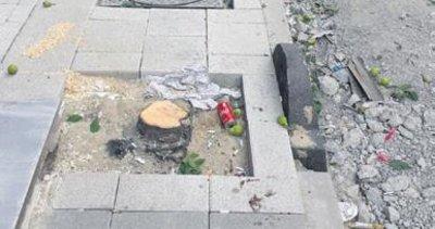 CHP'li belediye ağaçları kesti vatandaş isyan etti!