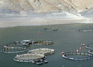 Sarımehmet Barajı'nda korkutan görüntü! Vatandaşlar endişeli