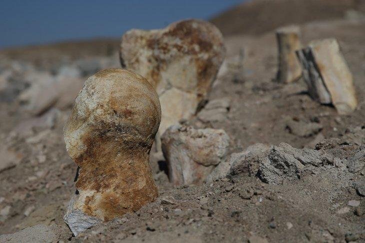 Keçi çobanı milyon yıllık fosil buldu