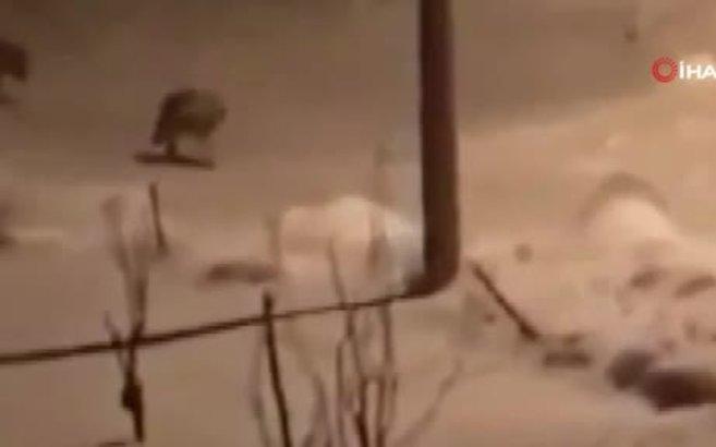 Aç kalan kurt sürüsü köye indi!