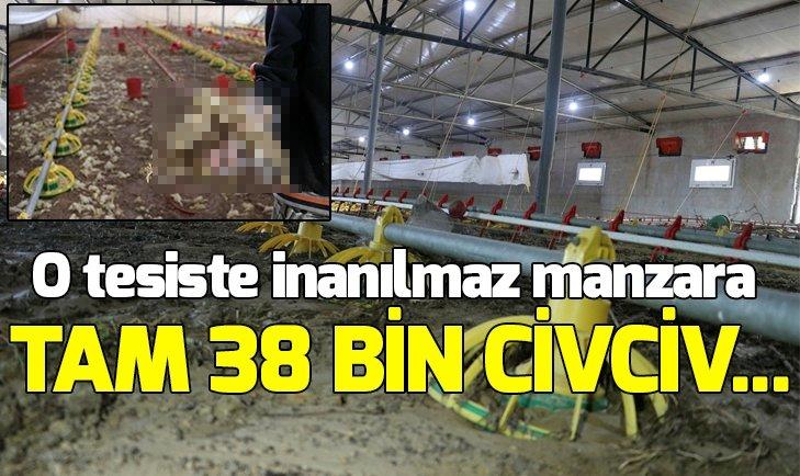 TAM 38 BİN CİVCİV...